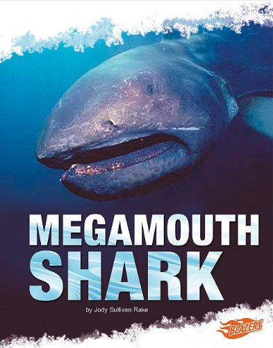 Megamouth Shark (Shark Zone)