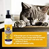 3-in-1 Cat & Kitten Training Aid with Bitter | 8 oz
