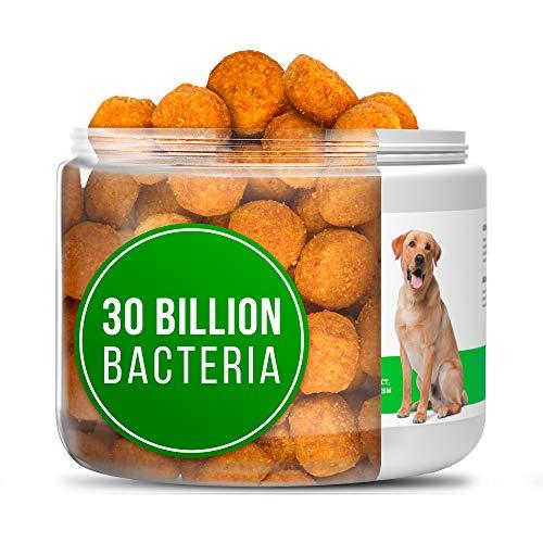 Buddy&Max Probiotics for Dogs - Chewable Dog Digestive Enzymes - Dog Diarrhea, Stomach, Vomit, Gas, Allergy Relief, Weight Support - Contains Prebiotics - Dog Probiotics Supplement - 130 Chews