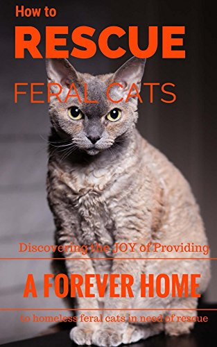How To Rescue Feral Cats: Discovering the Joy of Providing a Forever Home to Homeless Feral Cats in Need of Rescue (Feral and Abandoned Cat Rescue and Care Book 1) (Feral Rescue Cat)