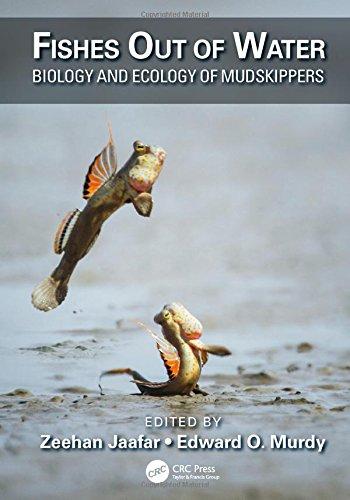 Mudskipper Fish - 2
