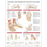 Anatomy and Injuries of the Foot and Ankle Unmounted Chart