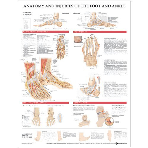 Anatomy and Injuries of the Foot and Ankle Anatomical Chart Anatomical Chart Co U.S. 9781587798375 ANF: Health and Wellbeing Allied Health Services - Physical Therapy Chiropody & podiatry Family & General Practice MEDICAL / Family & General Practice