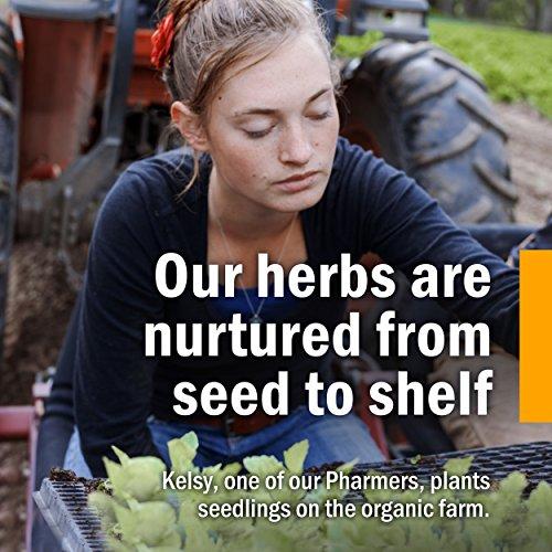 Herb Pharm Mullein/Garlic Herbal Ear Drop Oil – 1 Ounce