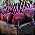 PAckage of 1,000 Seeds, Early Wonder Tall Top Beet (Beta vulgaris) Non-GMO Seeds By Seed Needs