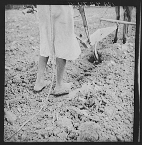 Photo: Alabama plow girl. Near Eutaw,Alabama