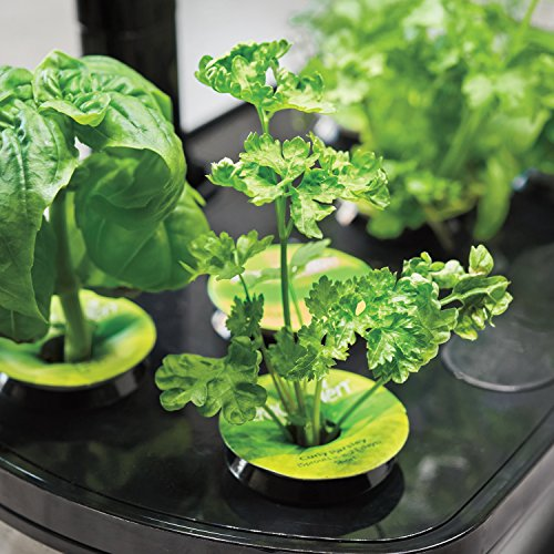 51HGEa7PC4L - AeroGarden Harvest Touch with Gourmet Herb Seed Pod Kit, Stainless Steel