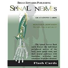 Spinal Nerves: Flash Cards