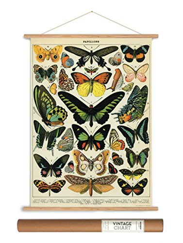 Butterfly Large Poster - Cavallini Papers Vintage Style Decorative Poster & Hanger Kit 20 x 28, 20