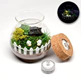 Pixie Glare Miniature Fairy Garden in a Glass Jar, With TWO LED Lights. Includes all accessories (Cow Farm) For Sale