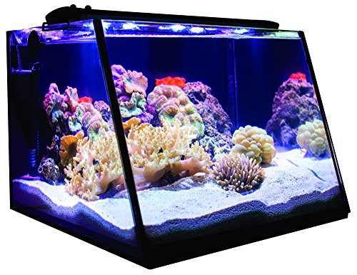 (Lifegard Aquatics Full-View 7 Gallon Aquarium with LED Light, Heater, Net, Algae Magnet & Built-in Back Filter with Pump)