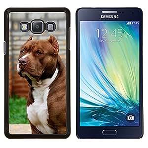 BearCase / Cubierta de protección Caso duro de la contraportada de Shell Plástico /// Samsung Galaxy A7 ( A7000 ) /// pitbull del perro americano canino Boston terrier