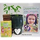 """TickleMe Plant Activity Box Kit"""" for 30 people - Grow the TICKLEME PLANT that """"Closes Its Leaves"""" when you TICKLE IT! Great for Science Classrooms, Bring Your Child To Work Day. Free Book!"""