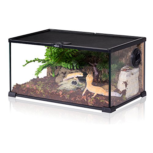 REPTIZOO Mini Reptile Glass Terrarium,Full View Visually Appealing Mini Reptile Glass Habitat