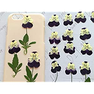 ShineBear Great Pansy Dried Flower Art for Party Festive Decoration Ment 1lot/120pcs Wholesale - (Color: Purple 1.5-2.5CM) 70