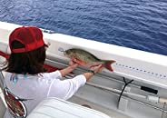 """Fish Ruler Sticker/Decal for Fishing or Spearfishing Boat Canoe or Kayak - 48"""" Long and 2&"""