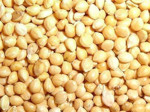 Ikshvaku Organics Proso Millet | Chena | Broomcorn | Natural Indian Farm Products from Karnataka | ONE Pack
