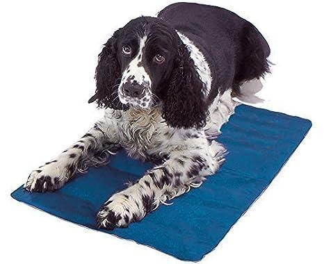 Esterilla refrigerante para mascotas - Cama para perros - Ideal para el coche - 40 x 50 cm: Amazon.es: Productos para mascotas