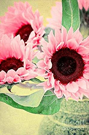 Green Seeds Co. 40 Unids Planta de Girasol Gigante plantas de Flores Bonsai Bonsai Plantas en Maceta Bonsai Plantas rusas de Girasol Para el Hogar Semillas: Naranja