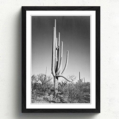 Framed Print - Black Frame - A2 (24.5x18 Inch) Ansel Adams Cactus in Arizona by Big Box - Black A2 Frame