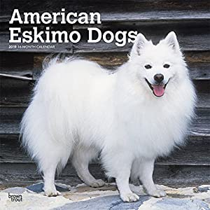 American Eskimo Dogs 2019 12 x 12 Inch Monthly Square Wall Calendar, Animals Dog Breeds American (Multilingual Edition) 5