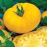 Burpee 'Sunny Boy' Hybrid | Yellow Beefsteak Slicing Tomato | 30 Seeds