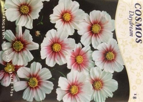 Daydream Cosmos Seeds - 1 gram - Annual