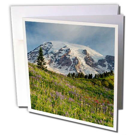 3dRose Danita Delimont - Mountain - WA, Mount Rainier National Park, Mount Rainier and alpine meadow - 12 Greeting Cards with envelopes - 12 Meadows Park