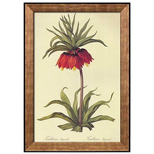 Scientific Illustration of a Flower Inside of a Beautiful Frame Fritillaria Imperialis by Pierre Joseph Redoute Framed Art