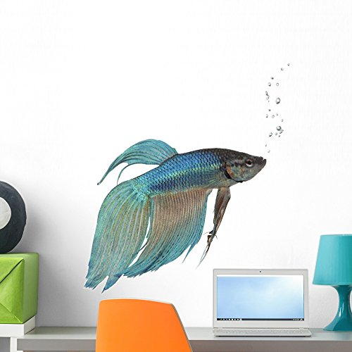 Wallmonkeys Blue Siamese Fighting Fish Betta Splendens Wall Decal Peel and Stick Graphic WM130742 (24 in W x 23 in H)