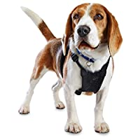 Good2Go Black No Pull Dog Harness, Medium