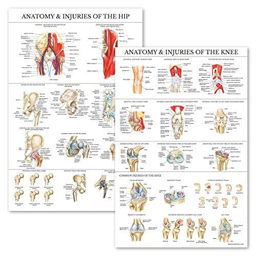 [해외]2 Pack - Anatomy and Injuries of The Knee & Hip Poster Set - Anatomical Chart Set - Laminated 18 x 27 / 2 Pack - Anatomy and Injuries of The Knee & Hip Poster Set - Anatomical Chart Set - Laminated 18 x 27