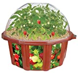 DuneCraft Doomsday Vegetables All-Star Collection Terrarium
