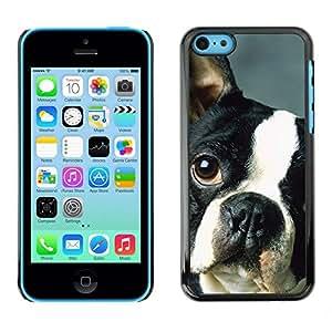 TopCaseStore / la caja del caucho duro de la cubierta de protección de la piel - French Bulldog Boston Bull Terrier Dog - Apple iPhone 5C