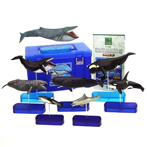 Colorata Marine Mammals Deluxe Real Figure Box (japan import) by Karorata