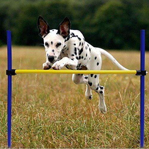 Dog Agility Kit - 9