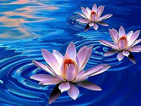 Amazon lotus flowers art print on canvas 24x16 inches lotus flowers art print on canvas 24x16 inches unframed mightylinksfo