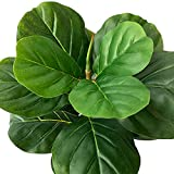 BESAMENATURE Artificial Fiddle Leaf Fig Tree/Faux