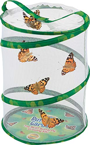 Insect Lore Butterfly Garden Original Habitat and Live Cup of Caterpillars with STEM Butterfly