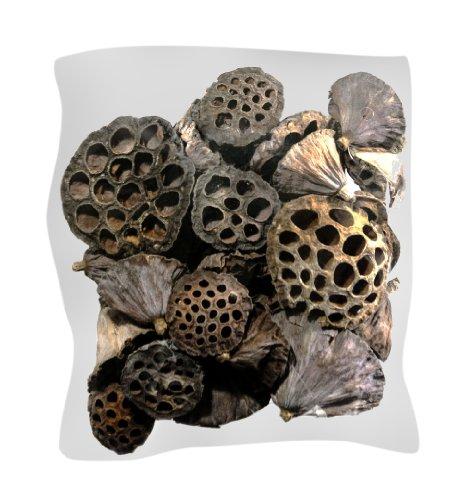 SuperMoss (20802) 40-Piece Lotus Pods, Brown, Mixed (Pine Cone Vase)