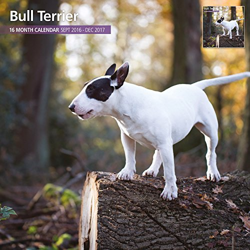 Magnet & Steel 2017 Bull Terrier Calendar, Traditional Wall Calendar