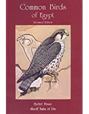 Common Birds of Egypt