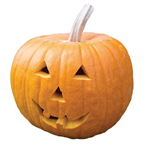 Burpee Jack O' Lantern Pumpkin Seeds 100 (Best Halloween Pumpkins To Grow)