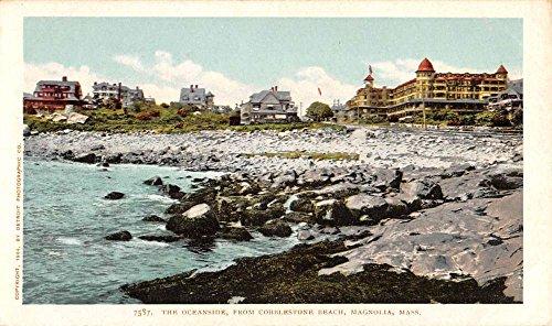 Magnolia Massachusetts Cobblestone Beach Oceanside Antique Postcard K83251