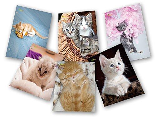 New Generation - Kitten - 2 Pocket Folder / Portfolio Heavy Duty 3 Hole Punch - 6 Folders per Pack Assorted 6 Fashion Designs UV Glossy Laminated