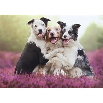 Amazon Three Dogs Hugging Avanti Birthday Card Health