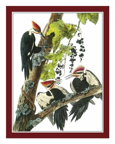 (Orenco Originals Pileated Woodpecker Bird by Audubon's Counted Cross Stitch Pattern)
