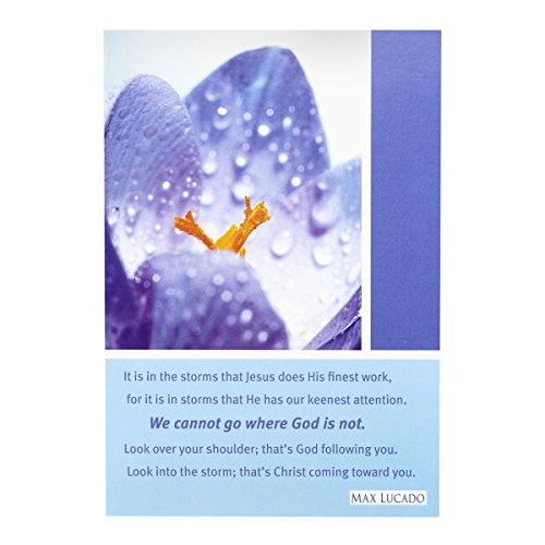Max Lucado Boxed - Sympathy - Inspirational Card Pack - Max Lucado - Purple Flower  - 6 Count