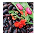 Heirloom Scarlet Runner Beans Seeds - 20 Large Bean Seeds Non GMO - Marde Ross & Company