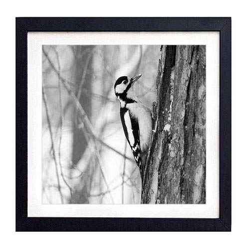 (GLITZFAS PRINTS Framed Wall Art - Woodpecker Bird Tree(1) - Art Print Black Wood Framed Wall Art Picture for Home Decoration - 16